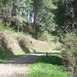 Bridleway running through Eggesford Forest