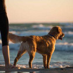 Dog friendly north devon